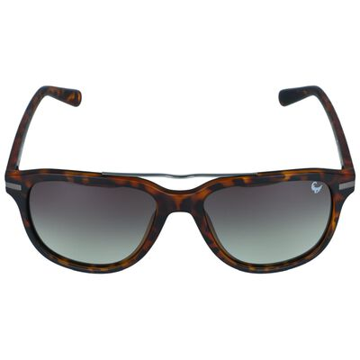 Polarised Sunglasses